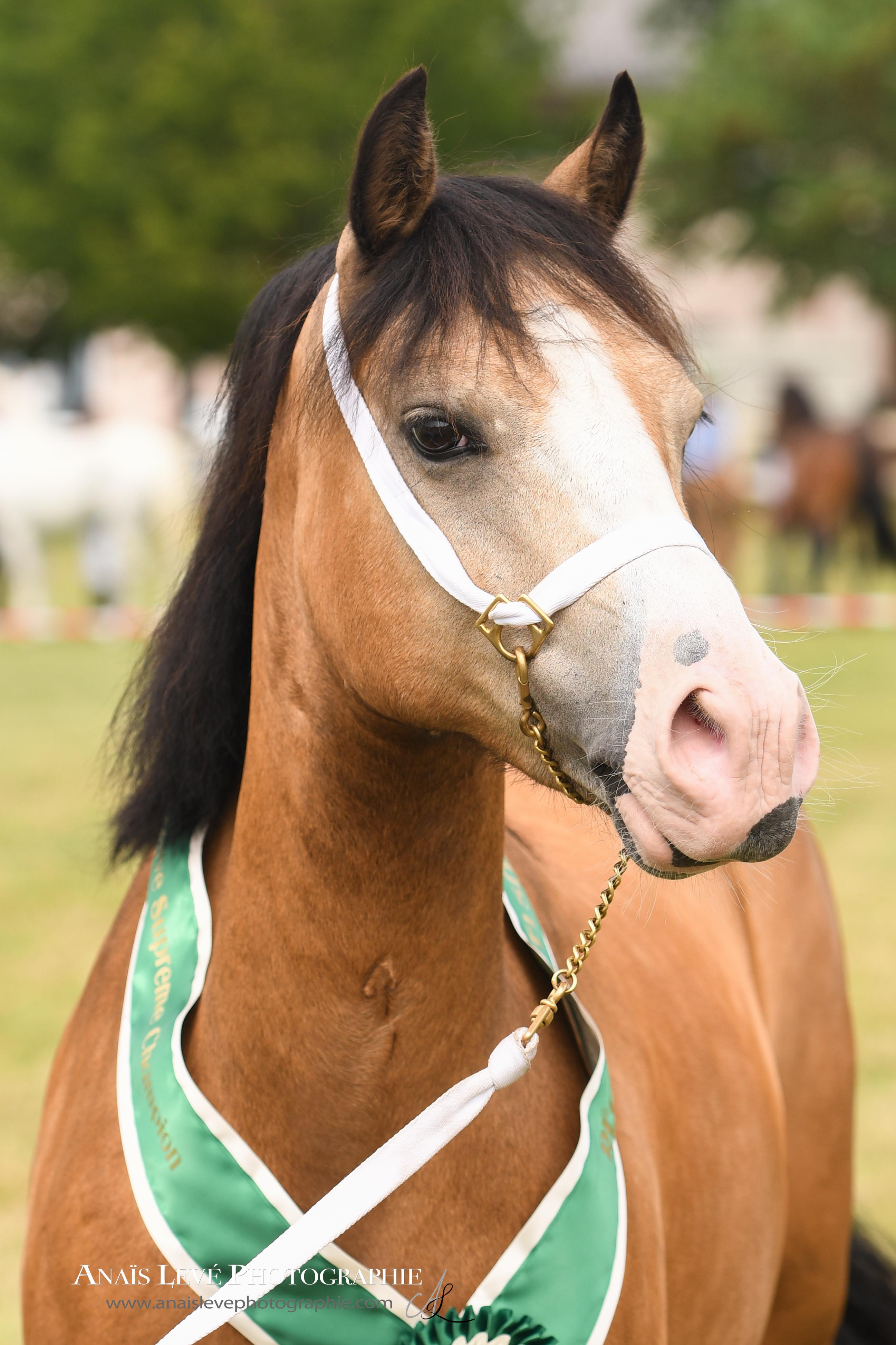 Association fran aise du poney et cob welsh afpcw for Le site internet