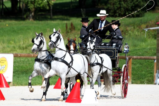 Jean Charles Davoust et son team de 4 poneys Welsh gagnants en concours d'attelage international - photo Nadine TOUDIC